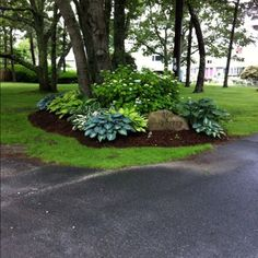 treetside hostas. gorgeous. Love the rock with address engraving. Could be a great way to display our address on the side of our corner lot. Circle Driveway Landscaping, Corner Landscaping Ideas, Landscaping With Trees, Landscaping Front Of House, Hydrangea Landscaping, Mailbox Landscaping, Circular Driveway, Large Backyard Landscaping, Shade Landscaping