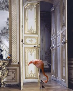 Flamingo in the mansion