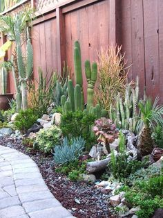 along the side yard, add Cardons for height also Pitaya's