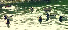 Brincar no lago