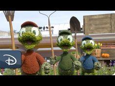 Time Lapse: Huey, Dewey & Louie | Epcot International Flower & Garden Fe...