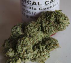 mslovejoy:  Gorilla Cookies | Medical Marijuana