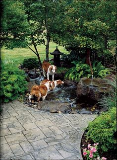 Provide access to water shade for dogs, dog pond, backyard ideas, dog backy Dog Friendly Backyard, Dog Backyard, Ponds Backyard, Backyard Projects, Backyard Landscaping, Backyard Ideas, Landscaping Ideas, Garden Ideas For Dogs, Fence Ideas
