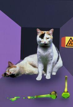 Beyond Schrodinger's cat and Heisenberg's uncertainty principle lies a whole world of quantum weirdness, writes Lauren Fuge. Schrodingers Cat, Cats, Heisenberg, Weird, Animals, Gatos, Animales, Animaux, Animal