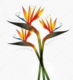 depositphotos_20243615-stock-illustration-bird-of-paradise-flower.jpg (926×1024)
