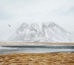 Three birds one stone. West Iceland. by mikeseehagel