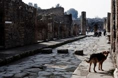 The Wrong Way for Pompeii | by Ingrid D. Rowland | NYR Daily | The New York Review of Books