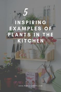 Inspiring examples of plants in the kitchen Outdoor Plants, Air Plants, Green Kitchen, Kitchen Decor, House Plant Care, Garden Care, Home Decor Items, Indoor Garden, Houseplants