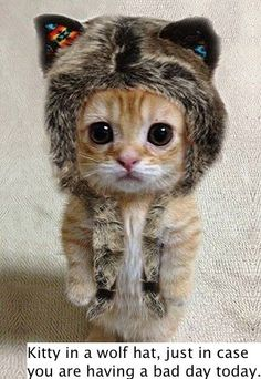 Kitty in a wolf hat