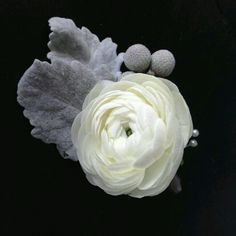 The groom will wear a boutonniere of white ranunculus accented by dusty miller and silver brunia wrapped in ivory ribbon with the stems showing.