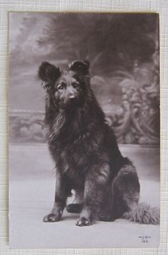 DOGS CHIEN SUPERB VINTAGE SIGNED POSTCARD~BLACK FLUFFY DOG