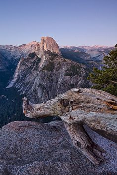 Half Dome and a fallen pine tree by noreo, via Flickr
