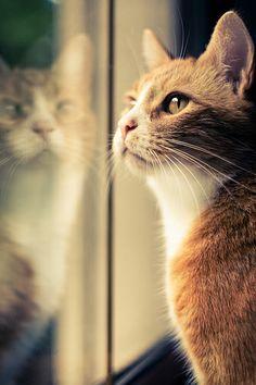 """Rasguña el vidrio de las ventanas con sus patitas.  Algunos gatos se sientan en la ventana y tocan el vidrio con sus patitas cuando ven a otro gato o a pájaros. """"Es frustración por barreras"""", dice Dodman, director de comportamiento animal de la Clínica en la Universidad de Tufts. """"Hay algo que les impide estar afuera con los animales que les gustaría alcanzar, y cuando rasguñan la ventana, están probando que tan fuerte es la barrera."""""""