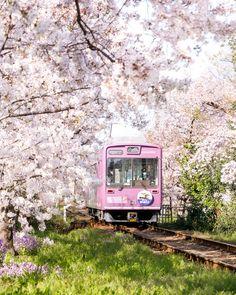 Beautiful Places In Japan, Beautiful Sites, Beautiful World, Trains, Seasons In The Sun, Japan Spring, Himeji Castle, Japan Sakura, Cherry Blossom Japan
