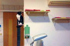 層板DIY 小套房也成貓咪天堂 | 台灣動物新聞網