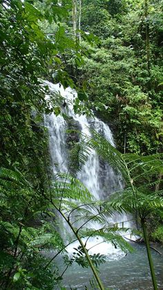 waterfall: Wooroonooran in Australia Places Around The World, Oh The Places You'll Go, Around The Worlds, Beautiful Places To Visit, Beautiful World, Amazing Places, Beautiful Images, Paradise Pictures, Australia Travel