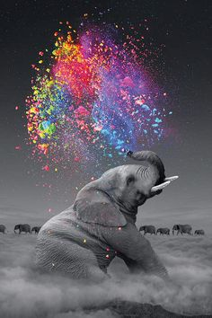 cloud elephant Cigarettes Animal DIY Digital Painting By Number Modern Wall Art Canvas Painting Unique Gift Room Decor – Garden & Home Elephant Colour, Elephant Love, Elephant Art, Elephant Tattoos, Colorful Elephant, Elephant Trunk, Elephant Design, Elefant Wallpaper, Beautiful Creatures