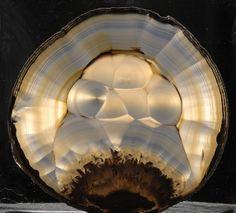 Turtleback Agate slice by Lovelylovely