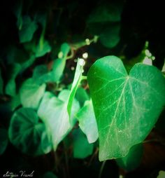 Ivy heart by sotiria8 on DeviantArt