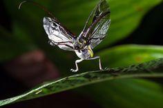 Pequeña danza de un escarabajo. Jonathan Ryan