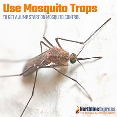 Use Mosquito Traps to Get a Jump Start on Mosquito Control Best Mosquito Trap, Mosquito Control, Asian Tigers, Mosquitoes, Posts, Spring, Blog, Messages, Blogging