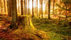 besthd nature backgrounds free download