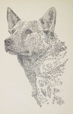 Dog art drawn entirely from the words Australian Cattle Dog. See all the 110 breeds at: drawDOGS.com ...check out using the promo code LIKE and get 25% off any of the 125 dog breed lithographs. http://drawdogs.com/110-different-breed-lithographs/