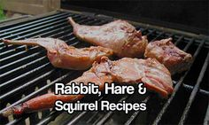 Rabbit, Hare and Squirrel Recipes   If the SHTF, you'll be glad of these recipes- so go ahead and get used to eating them now! Hares and squirrels are abundant and pretty easy to catch... http://honest-food.net/wild-game/rabbit-hare-squirrel-recipes/