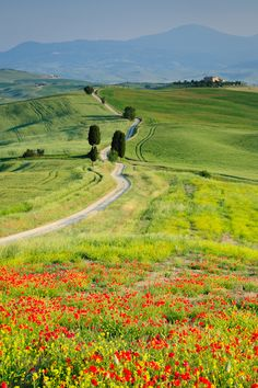 Hills at Terrapille Farm near Pienza, Tuscany, Italy by Mike Blanchette #travel jd