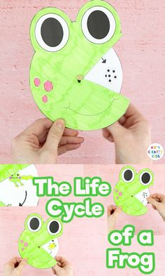 Explore the Life Cycle of a Frog with this printable spinner toy for kids to color and make. A great learning resource to teach the frog life cycle. Science Activities For Kids, Toddler Learning Activities, Science Experiments Kids, Science For Kids, Kids Learning, Science Toys, Paper Crafts For Kids, Preschool Crafts, Life Cycle Craft
