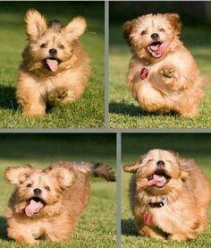Fluffy Puppy!!!