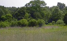 meadow, shrubs, forest