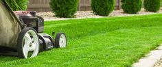 Looking for A expert lawn protection service In Edinburgh? Call Apollo Tree offerings For Edinburgh nowadays