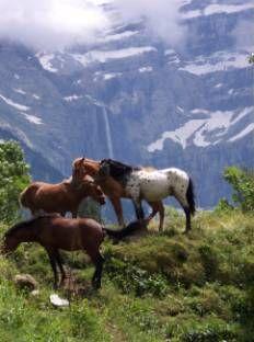 Spanish Pyrenees Mountains - Wild Horses ~Repinned Via Jose Alberto Galvache