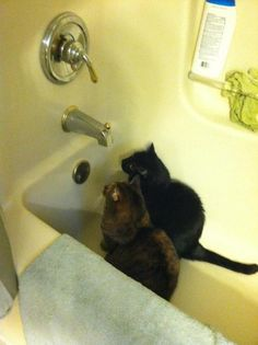 """""""So this is where the evil water comes out?"""" """"Yes...but this time, we'll be READY for it."""""""