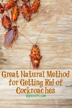 Great Natural Method for Getting Rid of Cockroaches. Just in case Diy Cleaning Products, Cleaning Solutions, Cleaning Hacks, Pest Solutions, Diy Hacks, Cleaning Supplies, Just In Case, Just For You, Insecticide