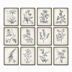 Antique Botanical Art Print Set of 12 Vintage by QuantumPrints
