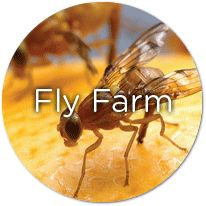 This experiment lets you see the entire life cycle of a fruit fly. Diy Fruit Fly Trap, Weed Killer Homemade, Garden Insects, Fruit Flies, Fly Traps, Outdoor Parties, Gardening Tips, Vegetable Gardening, Blooming Flowers