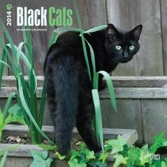 Black Cats 2014 Wall Calendar: Superstition wants us to believe that black cats go hand in hand with bad luck and witches, but in reality they are loving a Black Cat Art, Black Cats, Chat Web, Cat Calendar, Calendar 2014, Fiction, Cat Wall, Cat Breeds, New Image