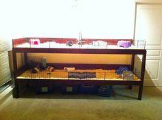 plexiglass guinea pig cage - Google Search