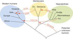 Neanderthal genome shows early human interbreeding