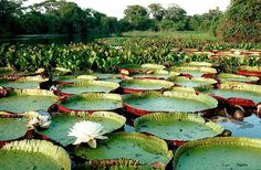 Pantanal, Brasil