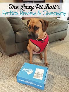 We're Giving Away a @getpetbox For a Dog or Cat! | http://www.thelazypitbull.com/2015/03/petbox/