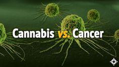 Cannabis Vs. Cancer: Studies Suggest Cannabinoids May Kill Human Cancer Cells