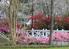 Azalea Park is a beautifiul 16- acre park at South 5th Street in downtown Summerville, SC, USA.