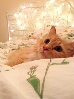 I want my bed like this, and a kitty to match it!