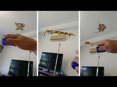 「フクロモモンガを手懐けると…こんなかわいい体験ができるなんて!」(動画):らばQ