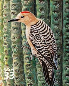 Gila Woodpecker stamps - mainly images - gallery format