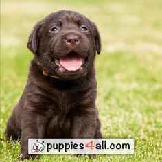 Lets run! #dog #cute #puppy http://www.puppies4all.com/