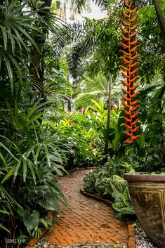 Shade Garden Flowers And Decor Ideas Green Path By Thomas Kaye On Small Tropical Gardens, Tropical Garden Design, Tropical Backyard, Tropical Plants, Palm Trees Landscaping, Tropical Landscaping, Backyard Landscaping, Bali Garden, Balinese Garden